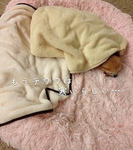 こまめ毛布10・10